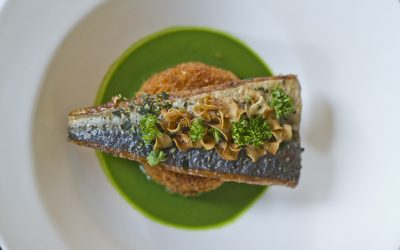 Docere Wellness Presents Herb Crusted Trout